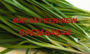 Hẹ sấy khô – Tinh bột hẹ – Máy sấy hẹ, nông sản công nghiệp 0963664544